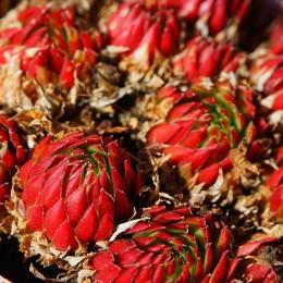 Ces plantes qui font du bien à votre santé